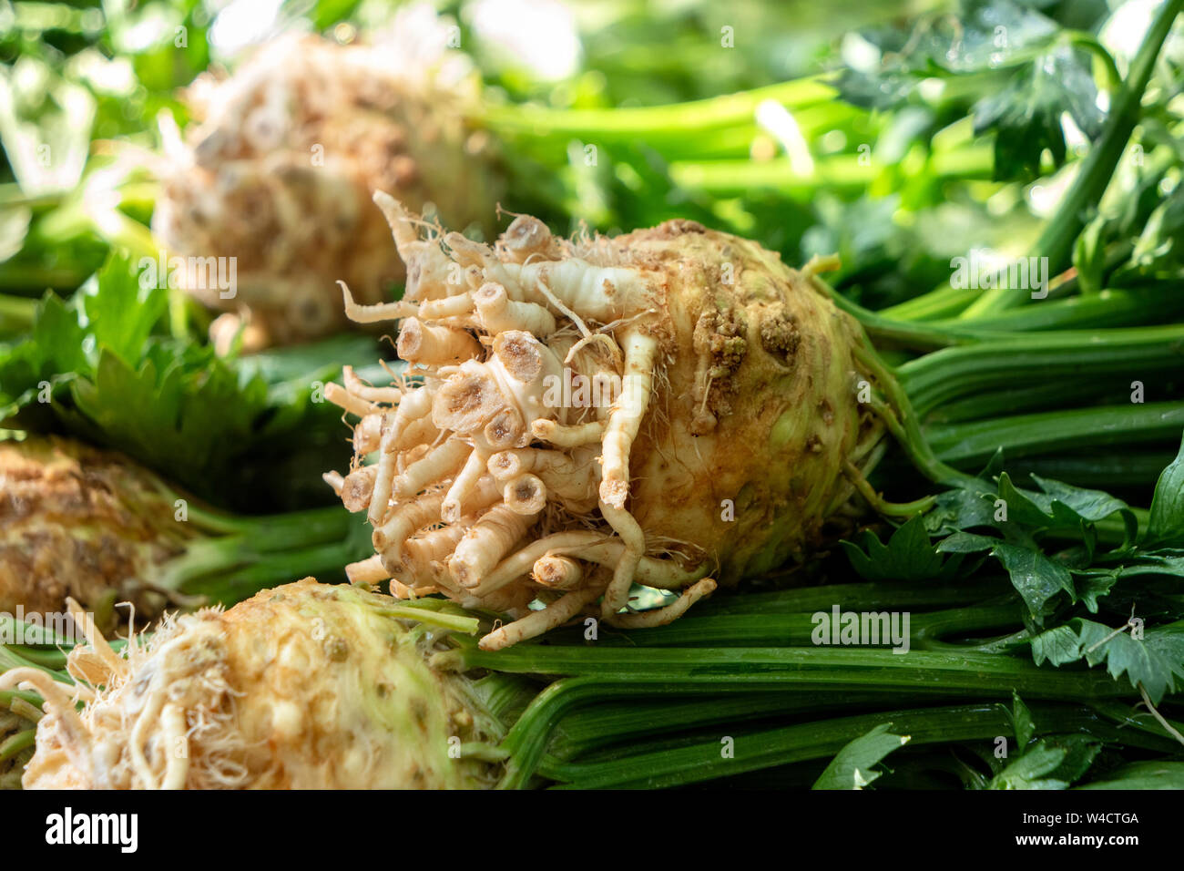 Detail of a pille of celeriacs with stalks and leaves at farmers market. Stock Photo