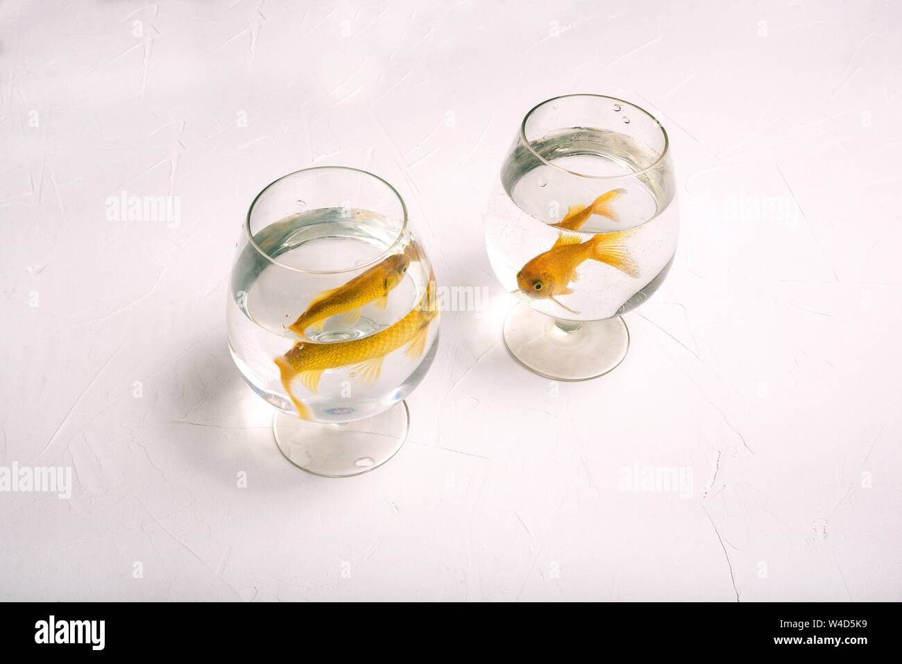 Separate glasses with goldfish. Two golden-colored fish swim in the water. Lonely fish in glasses on a white background. Aquarium fish. Separation Stock Photo