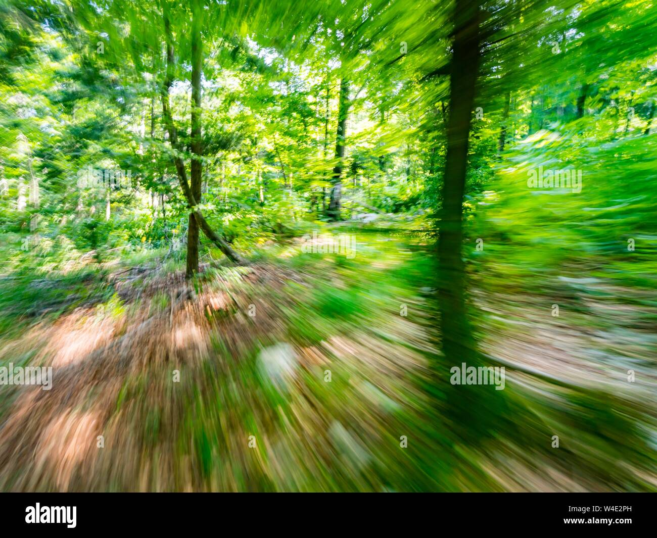 Green forest countryside speeding through dense trees natural environment Stock Photo