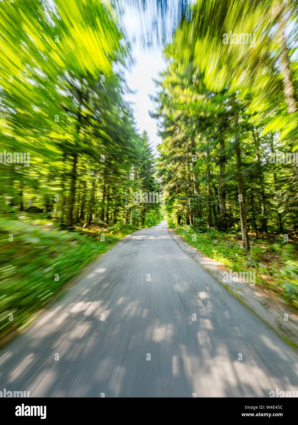 Green forest countryside speeding on road Stock Photo