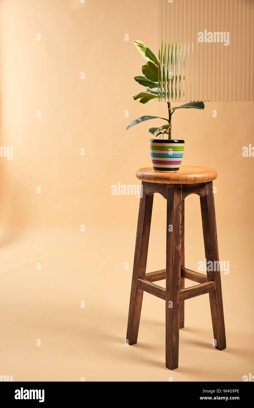 Fabulous Plant With Light Green Leaves In Colorful Flowerpot On Uwap Interior Chair Design Uwaporg