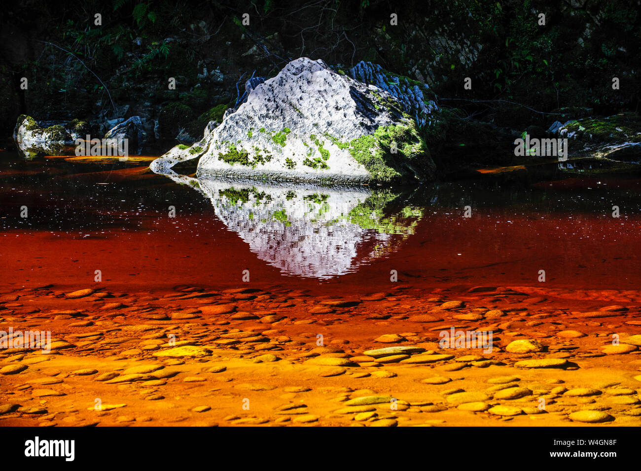 River with brown water from tree leaves running through the Oparara Basin, Karamea, South Island, New Zealand Stock Photo