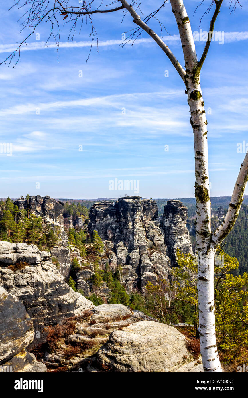 View to Elbe Sandstone Mountains with birch tree in the foreground, Saxony, Germany Stock Photo