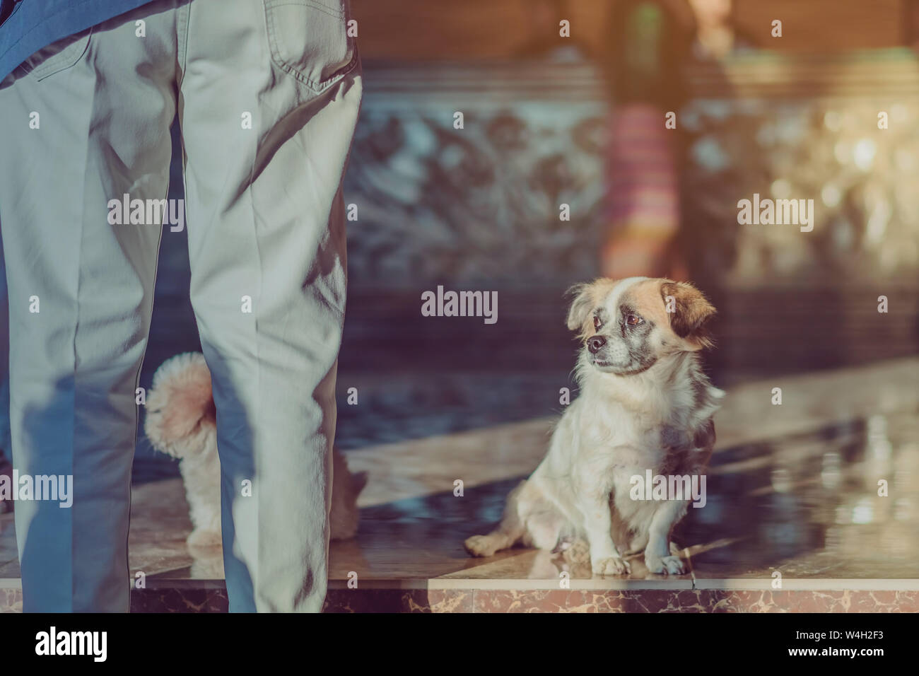 Little cute dogs wait to welcome guests in front of the hotel in the morning. Stock Photo