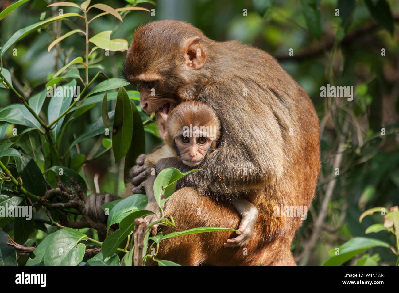 Monkeys relaxing near Swayambhunath temple in Kathmandu Stock Photo