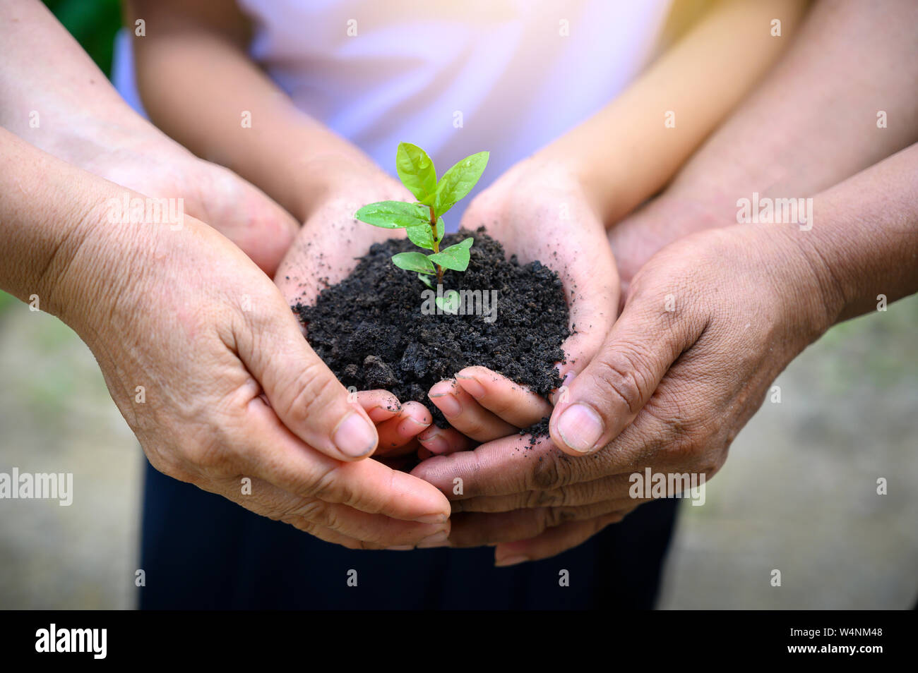 environment Earth Day In the hands of trees growing seedlings. Bokeh green Background Female hand holding tree on nature field grass Forest conservati Stock Photo