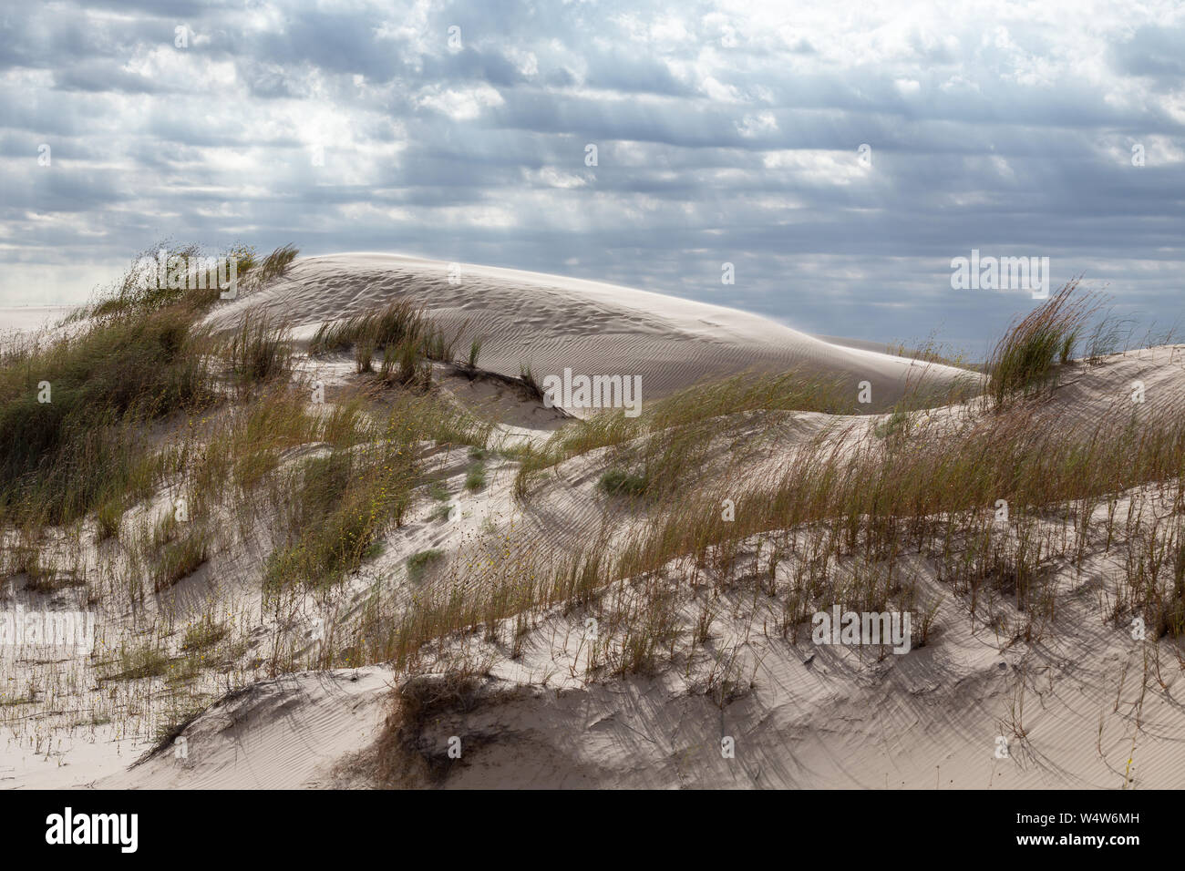 Sand Grains Stock Photos & Sand Grains Stock Images - Alamy