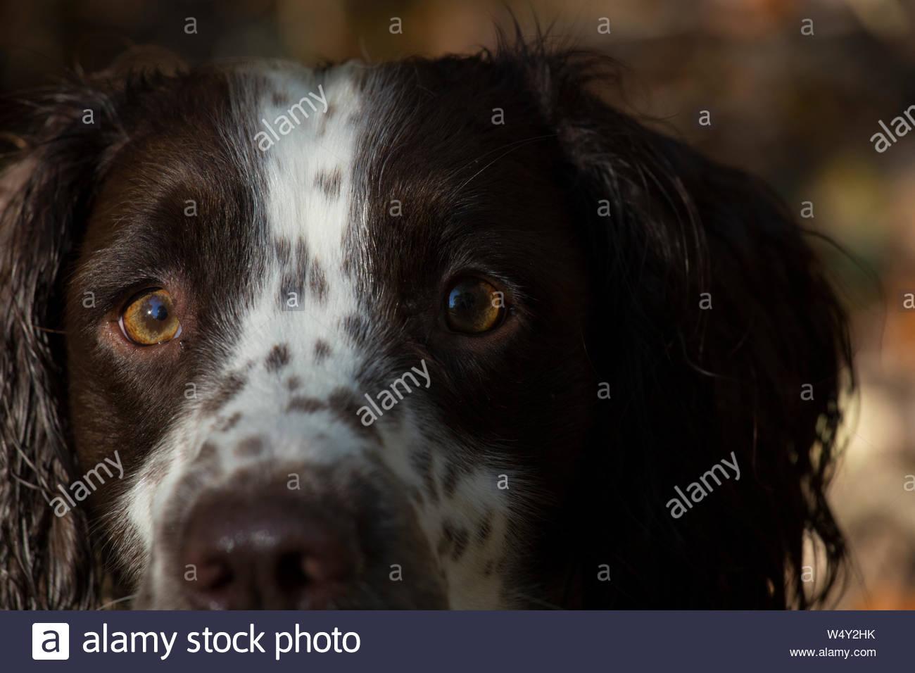 Dog Eyes Contact Stock Photos & Dog Eyes Contact Stock