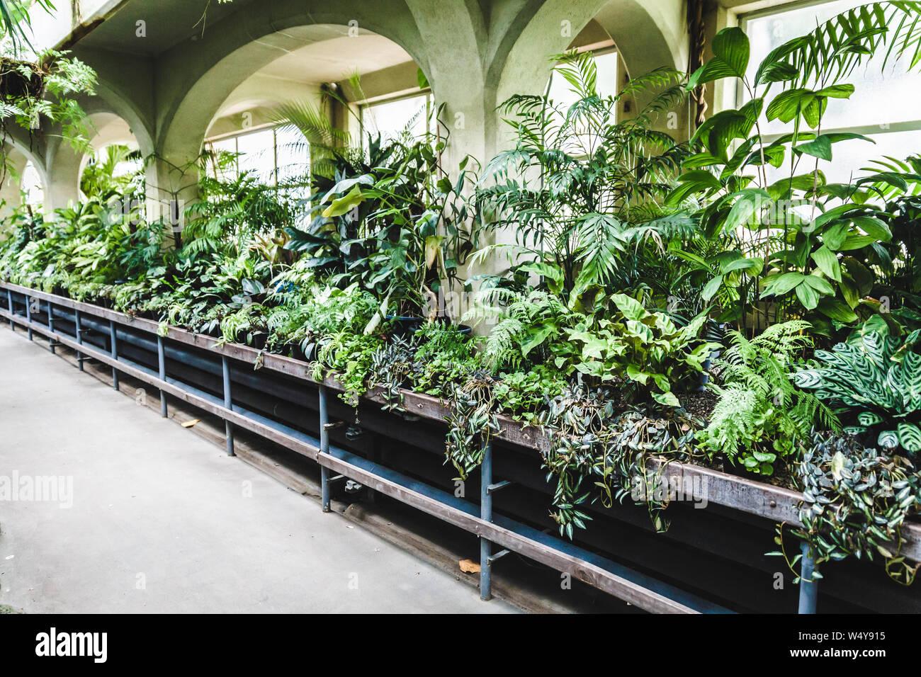 Tropical Greenhouse Glasshouse Sunny Interior Full Of Lush Green