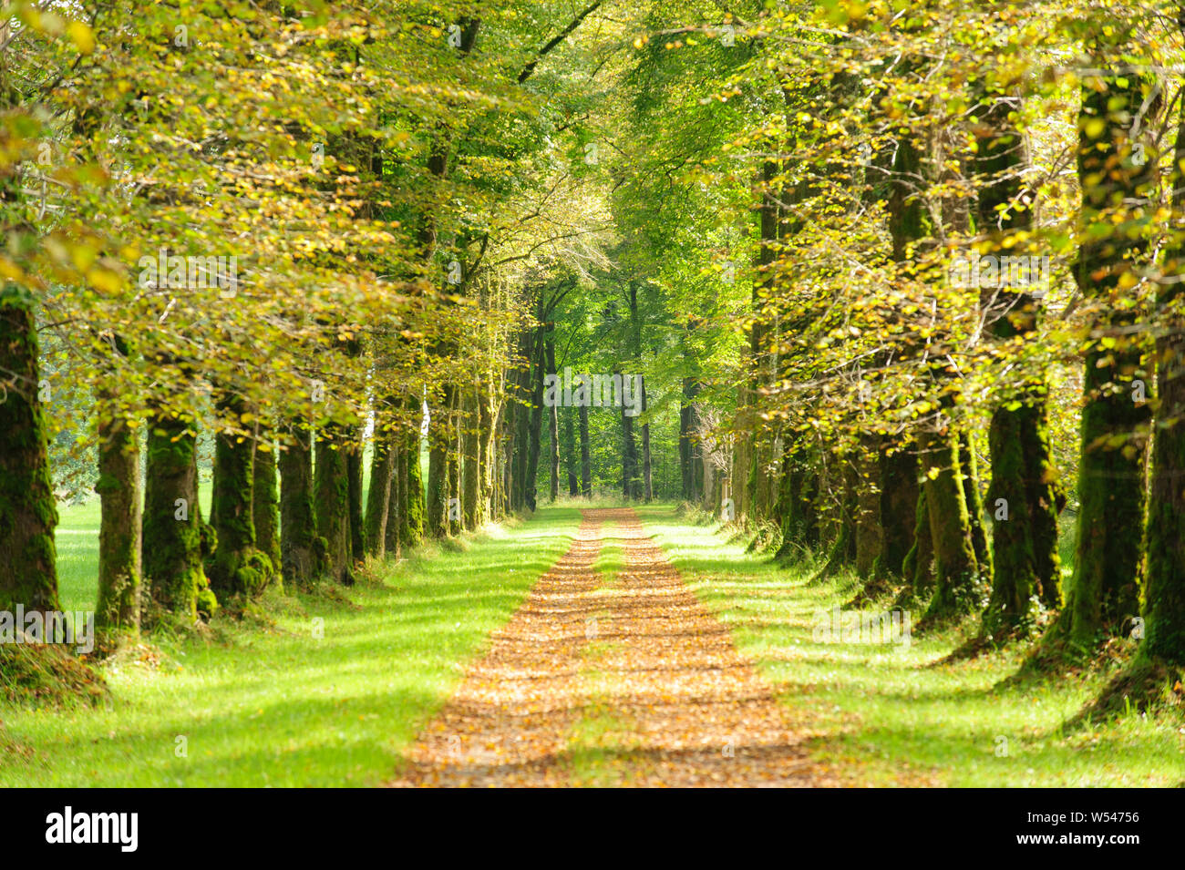 tree-lined alley with footpath in middle Stock Photo