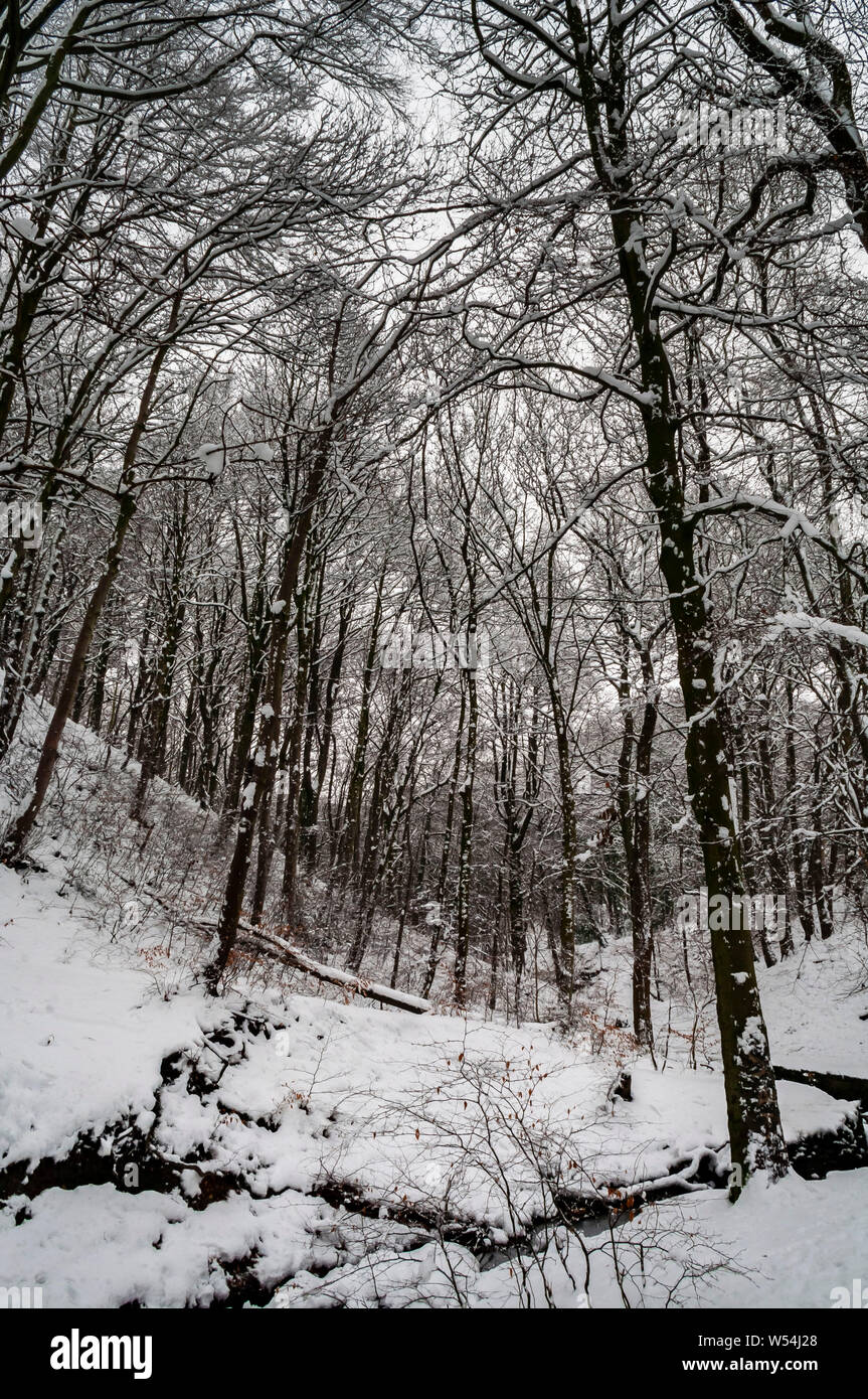 Winter Scene in Cobnar Wood within Graves Park, Sheffield, looking upslope following the stream. Stock Photo