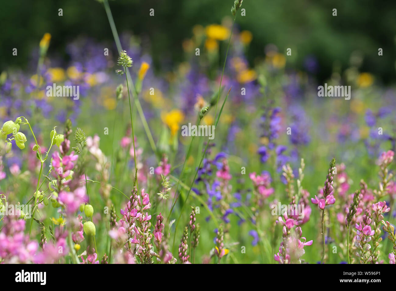 Makro Blumenwiese Hintergrund Stock Photo