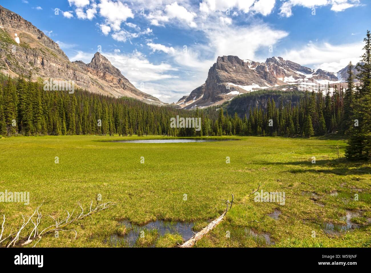 Green Alpine Meadows Natural Parkland and Distant Mountain Peaks Summertime Hiking Banff National Park Canadian Rockies Stock Photo