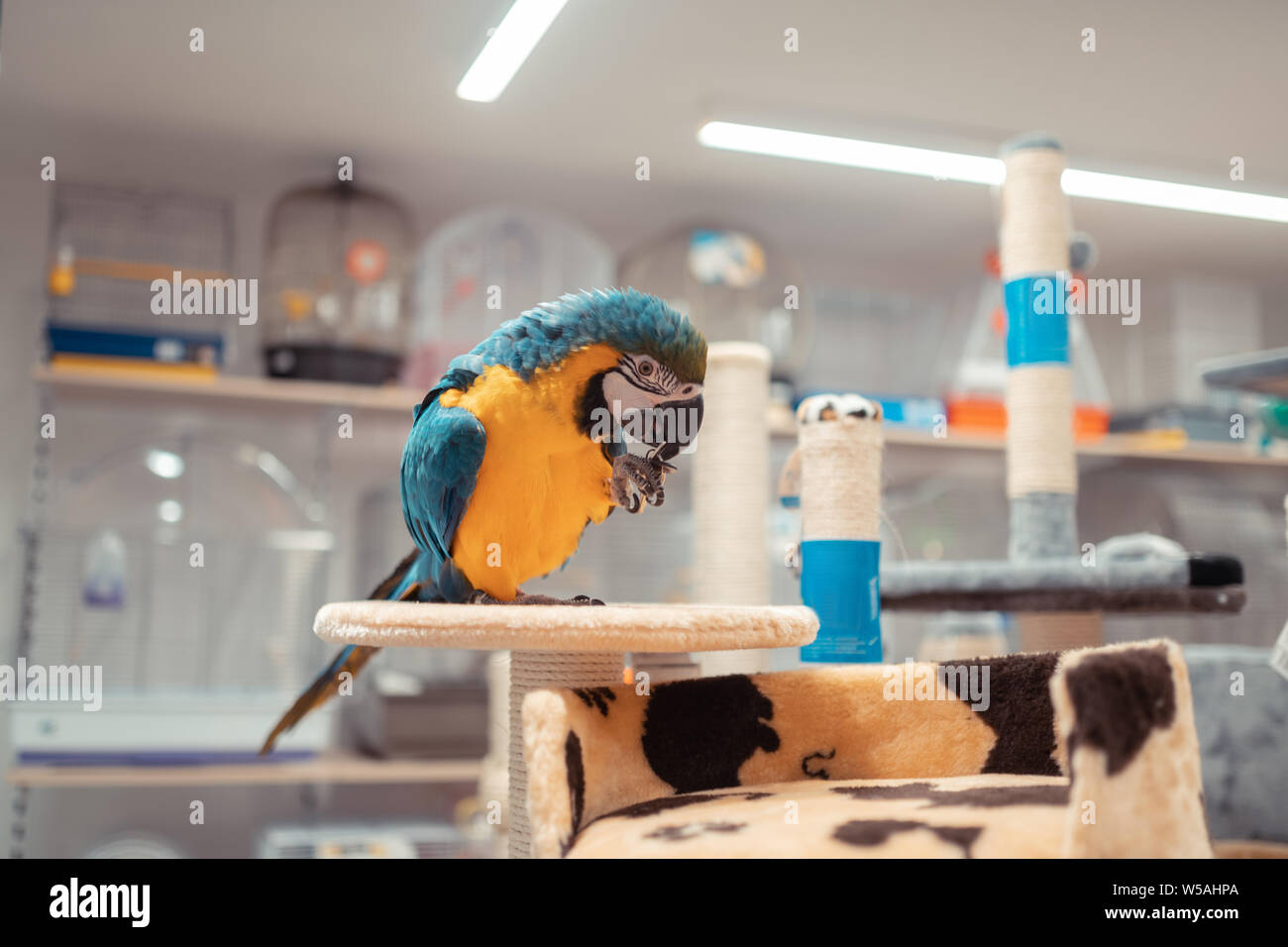 Bird Pet Shop High Resolution Stock Photography And Images Alamy