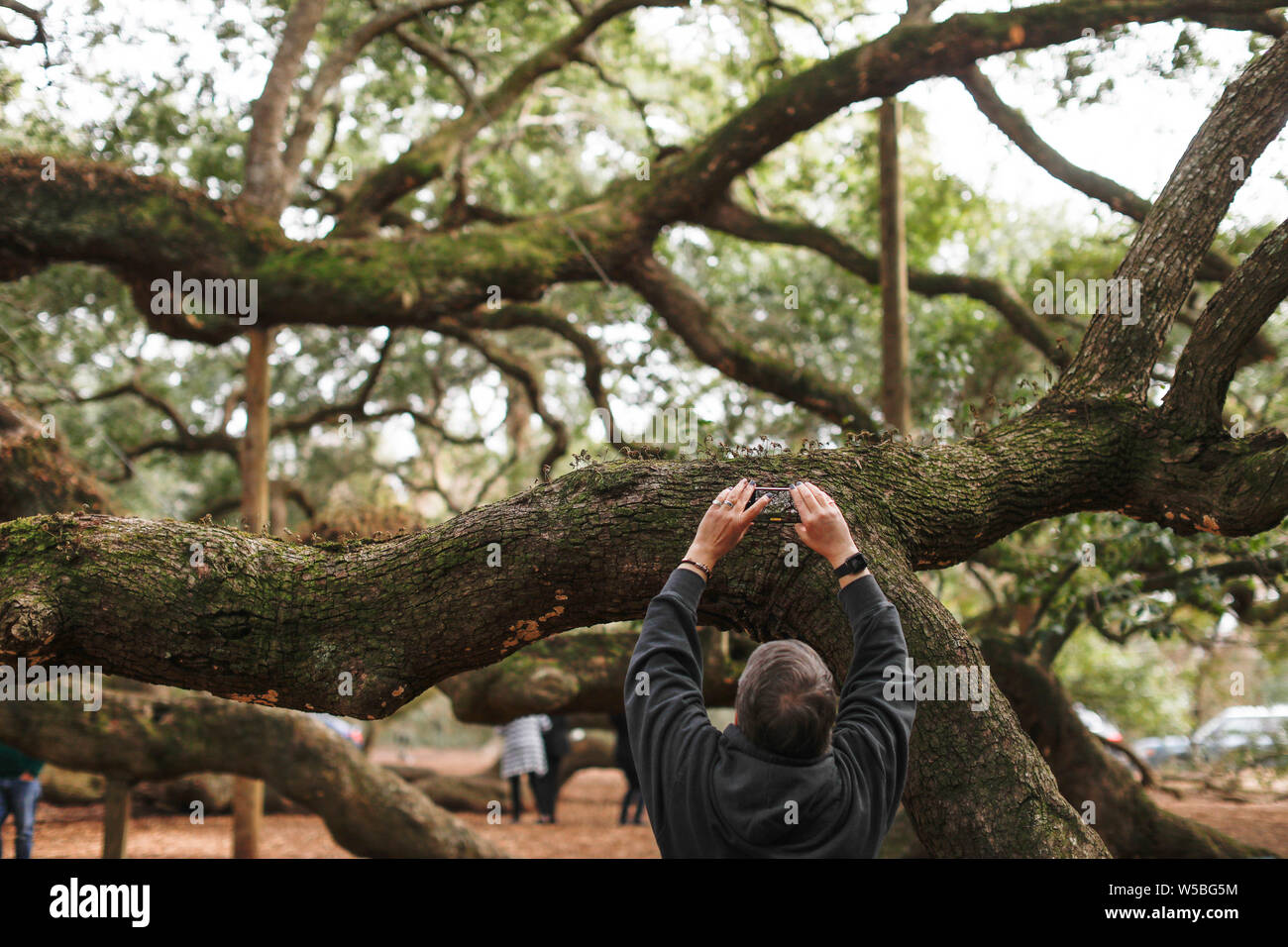 People visit the Angel Oak tree on Angel Oak Park on Johns