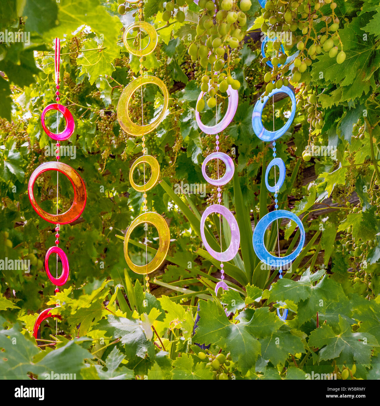 Glass Decoration With Bunch Of Green Grapes On Background Colorful Glass As Exterior Decoration For Cafe Restaurant Traveling Background Sunny Summer Days In Park Summer Holidays Background Stock Photo Alamy