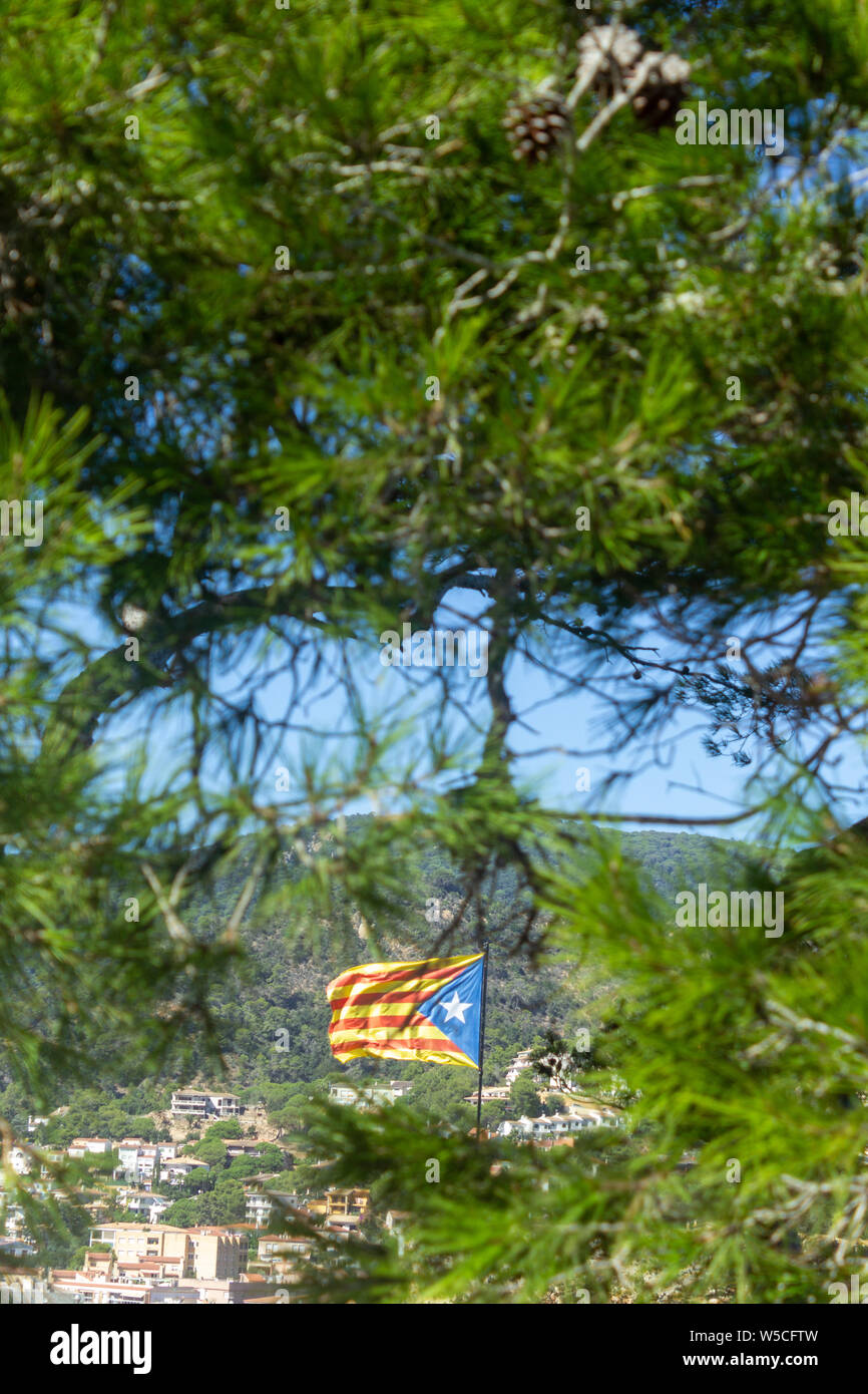 A view of the Catalonian flag flying in a strong breeze behind a line of trees Stock Photo
