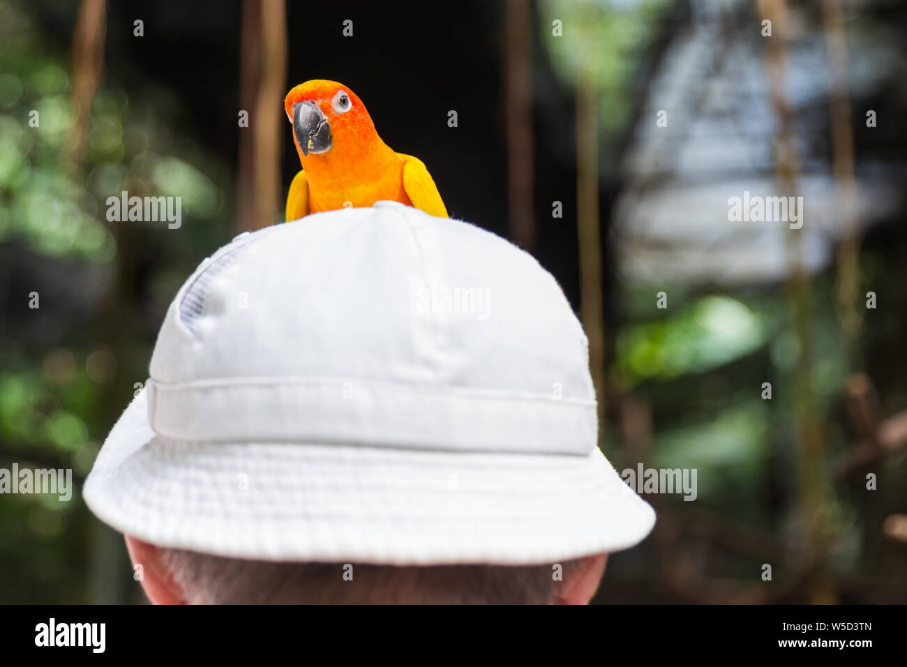 Parrot Play Stock Photos & Parrot Play Stock Images - Alamy