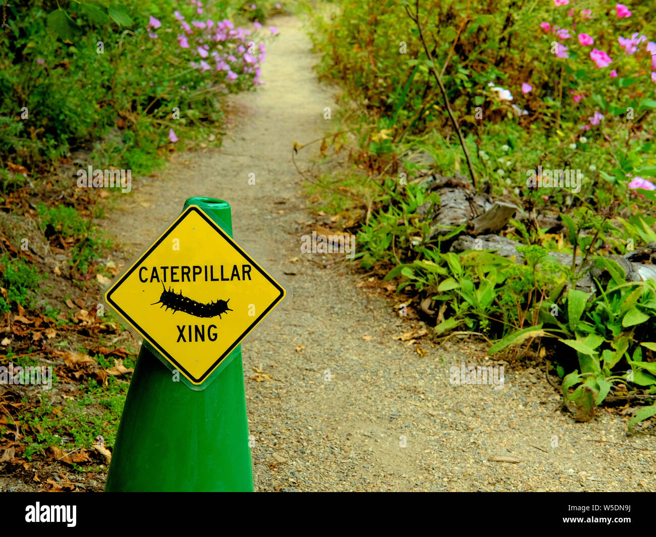 A yellow yield sign on a green cone for a Caterpillar Crossing on a dirt path at the San Francisco Botanical Garden in San Francisco, California, USA. Stock Photo