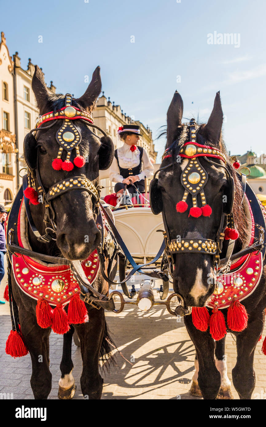 Horse drawn carriage in the main square, Rynek Glowny, in the medieval old town, UNESCO World Heritage Site, Krakow, Poland, Europe Stock Photo