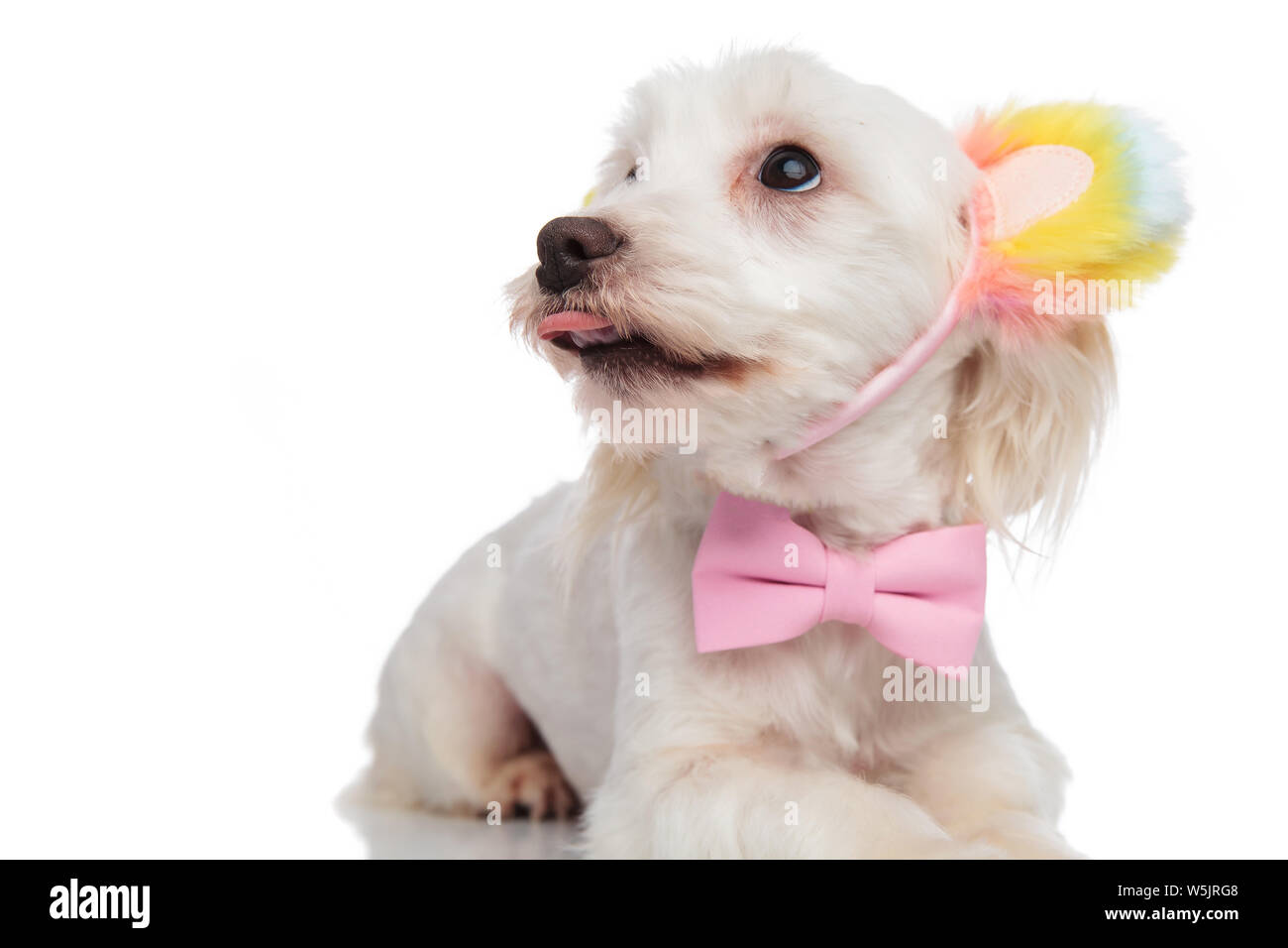 Clip with an Image of a Dog tie pin Elegant and Casual Style Boxer uncropped