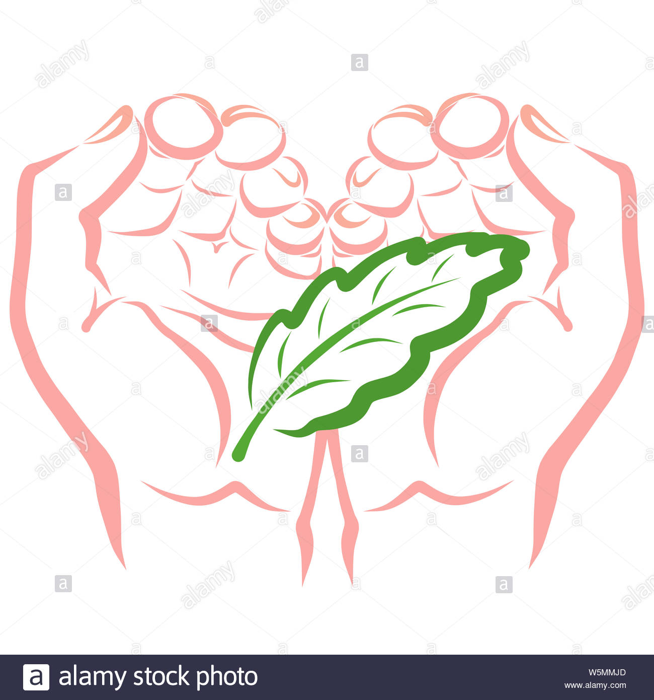 green leaf of a plant or tree in the hands Stock Photo