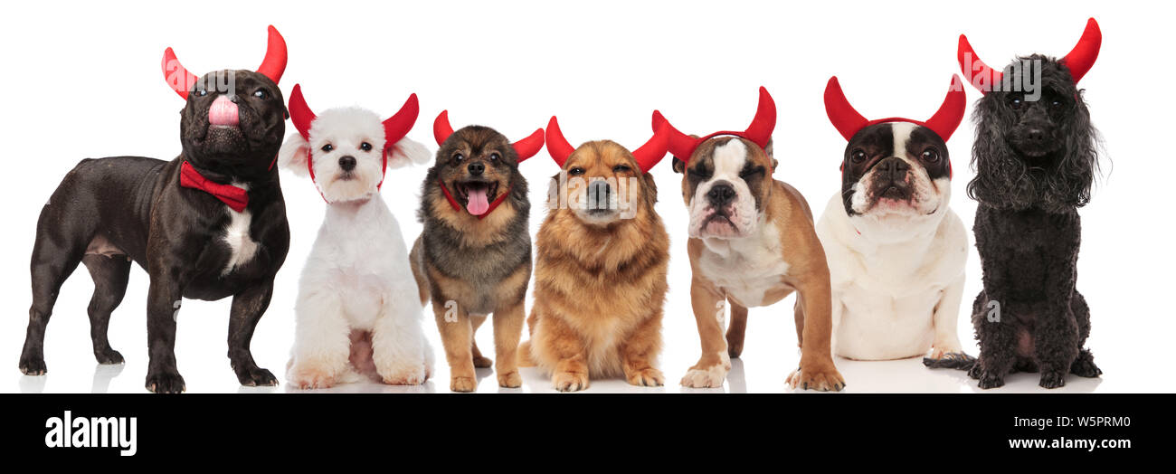 Seven Dogs Stock Photos & Seven Dogs Stock Images - Alamy