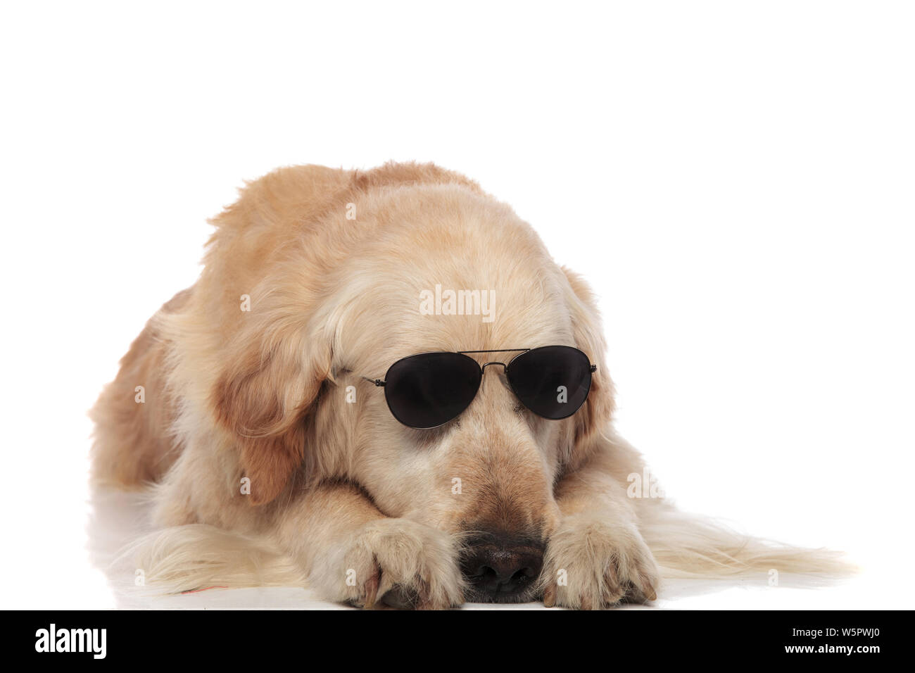 Labrador Wearing Sunglasses Stock Photos Amp Labrador