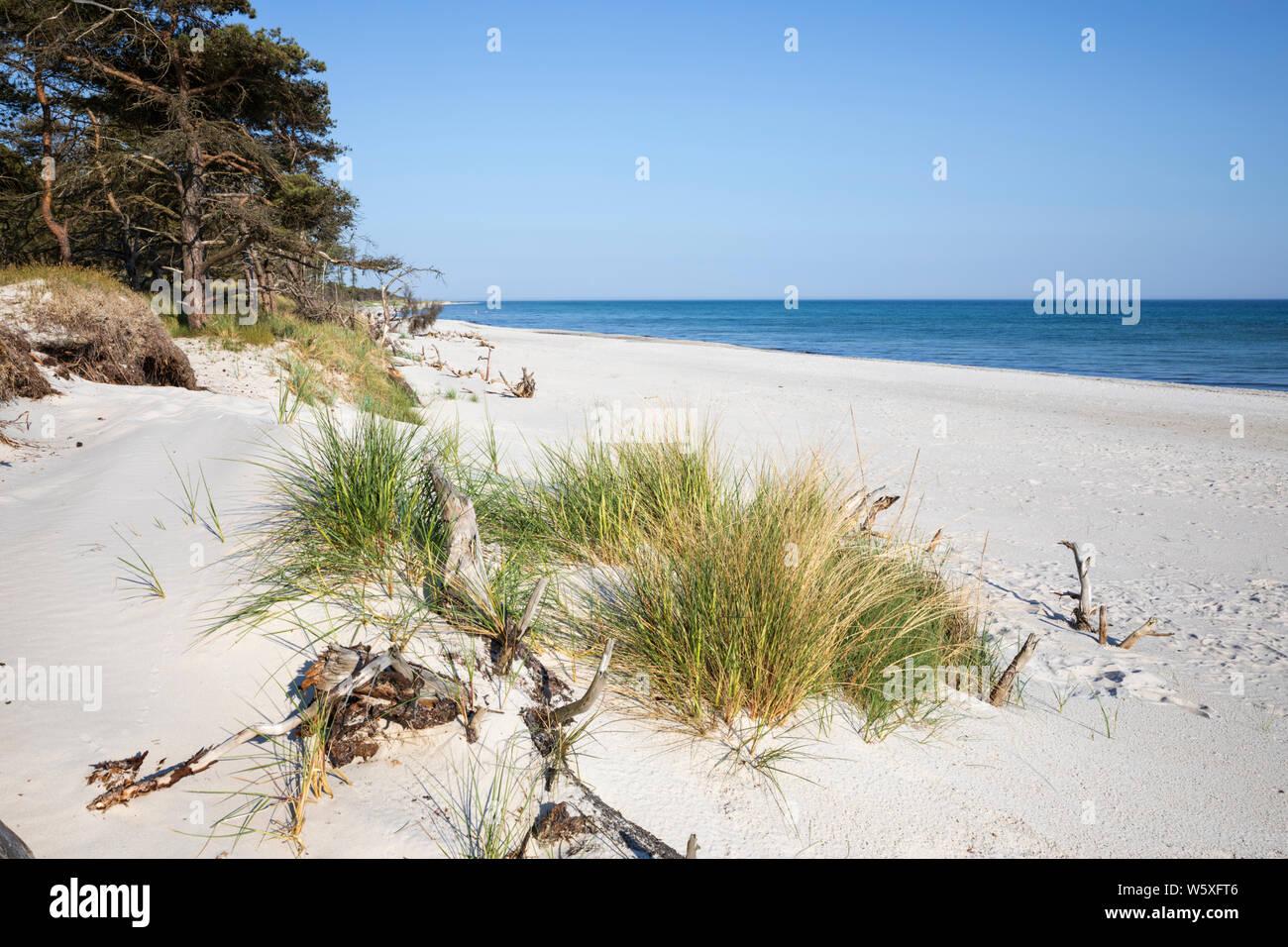 White sand beach of Dueodde on island's south coast, Dueodde, Bornholm Island, Baltic sea, Denmark, Europe Stock Photo