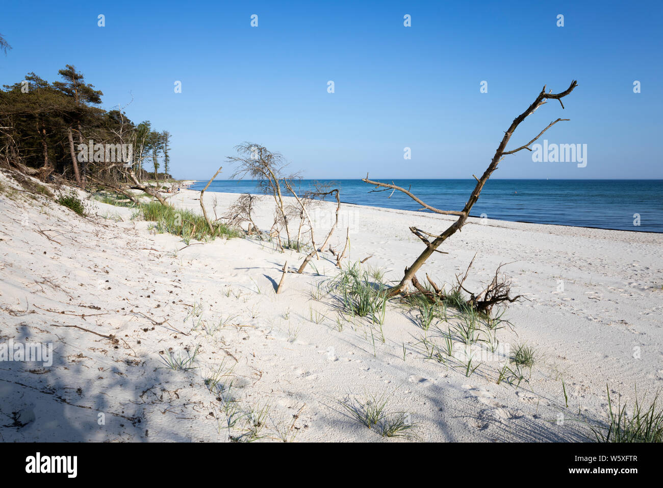 White sand beach of Dueodde on island's south coast, Dueodde, Bornholm Island, Baltic sea, Denmark, Europe Stock Photo