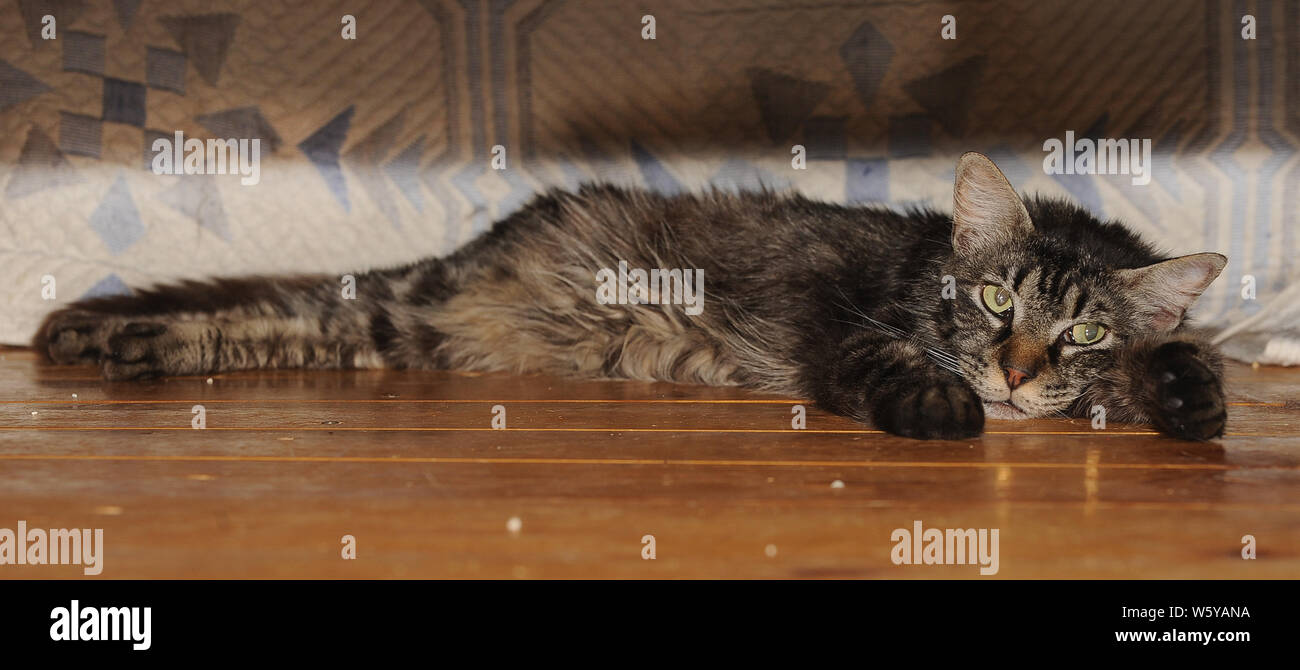 Abused Cats Stock Photos & Abused Cats Stock Images - Alamy