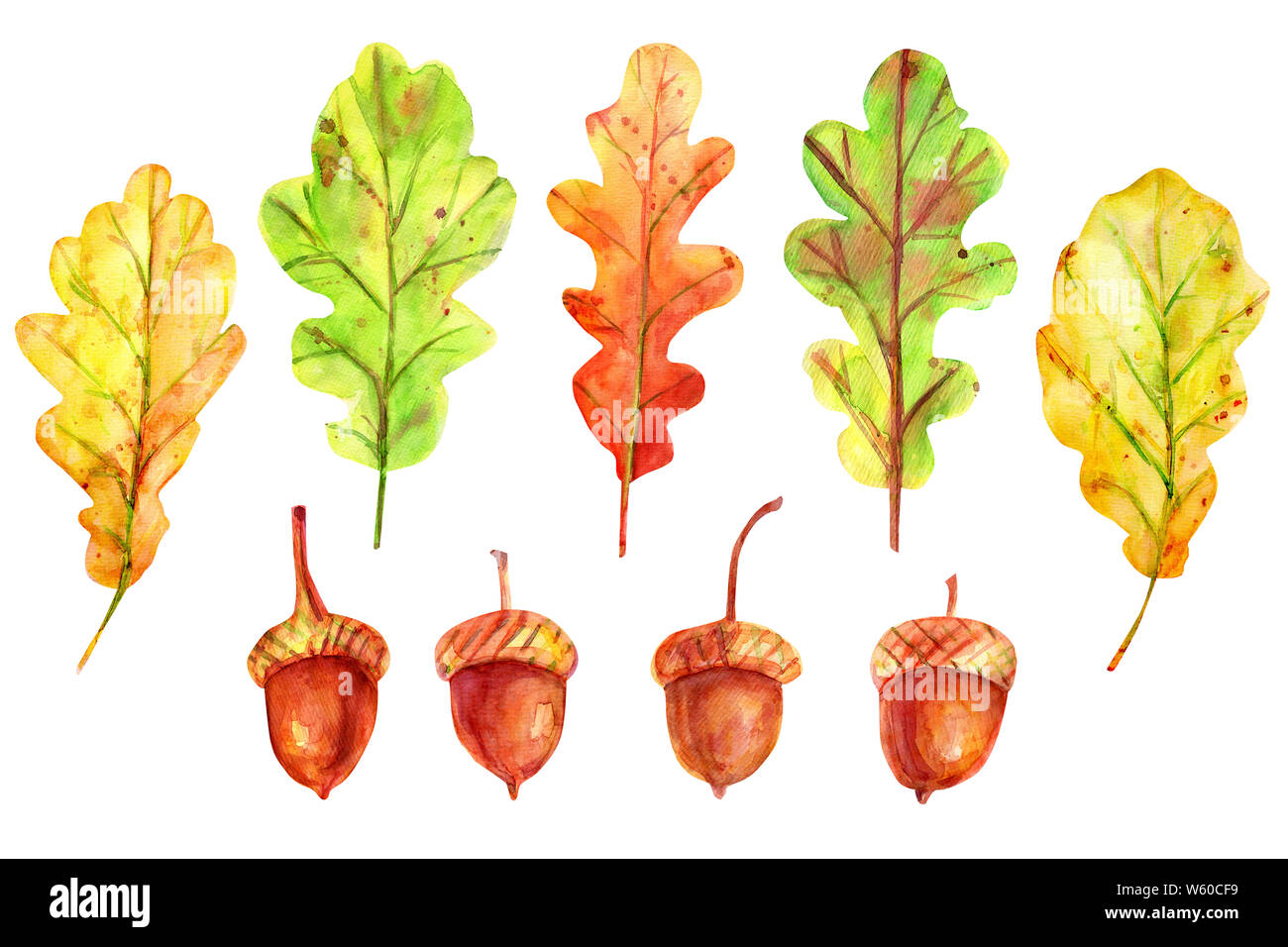 Watercolor autumn set with leaves and acorns. Four seeds of a tree of an oak red-brown color with a gold-ocher cup. 5 fallen leaves of yellow, green a Stock Photo