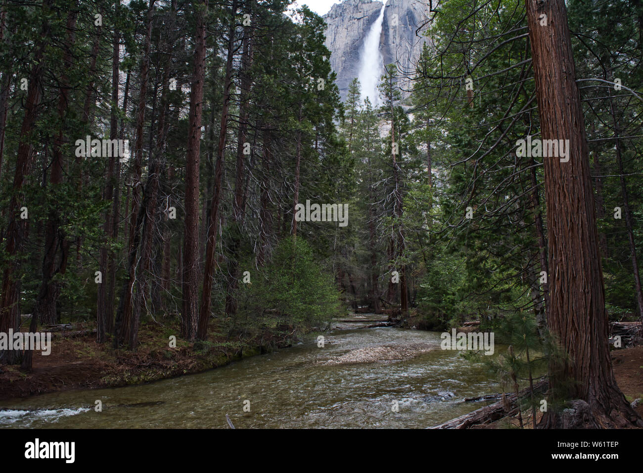 Falls Through a Forest in Yosemite Stock Photo