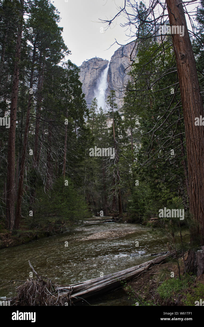 River Through a Forest in Yosemite Stock Photo