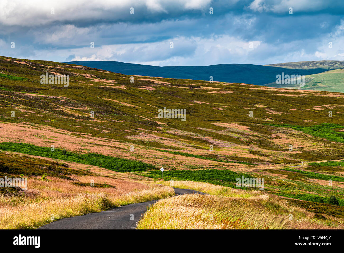 Langholm, Dumfries and Galloway, Scotland, UK. 13th July 2019. Looking north east across Langholm Moor from Charlies Moss . Stock Photo