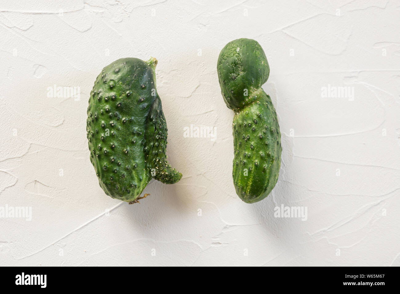 Ugly organic abnormal two cucumber. Concept organic vegetables. Close up. Stock Photo
