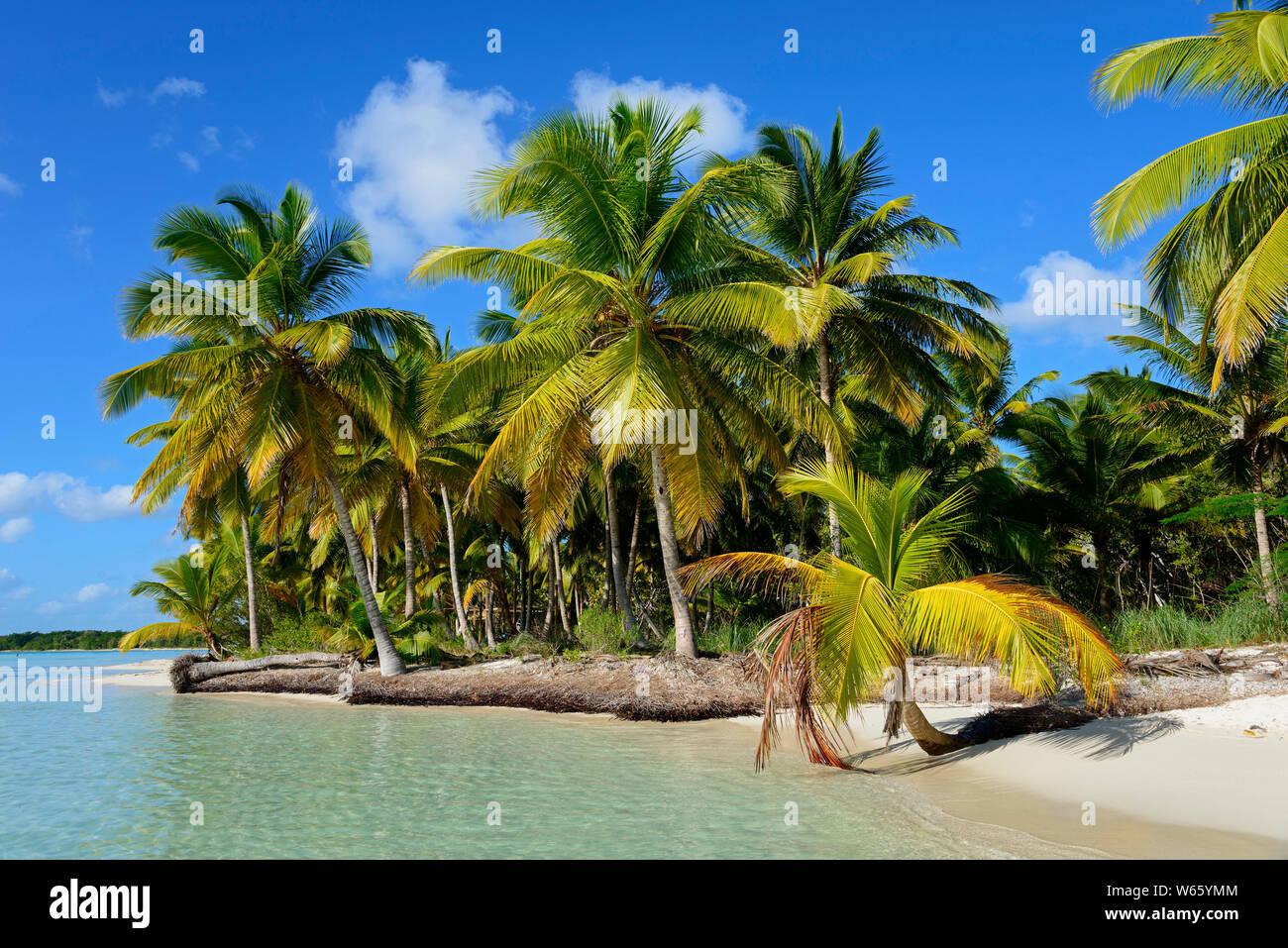 Palm beach, Parque Nacional del Este, Dominican Republic, Carribean, America Stock Photo