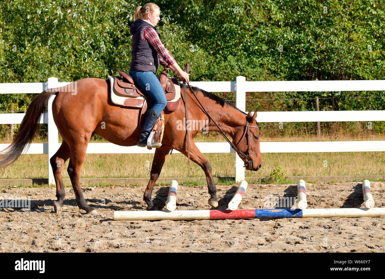 Horse Training Western Horse Ground Work Young Horse Rails Rail Stock Photo Alamy