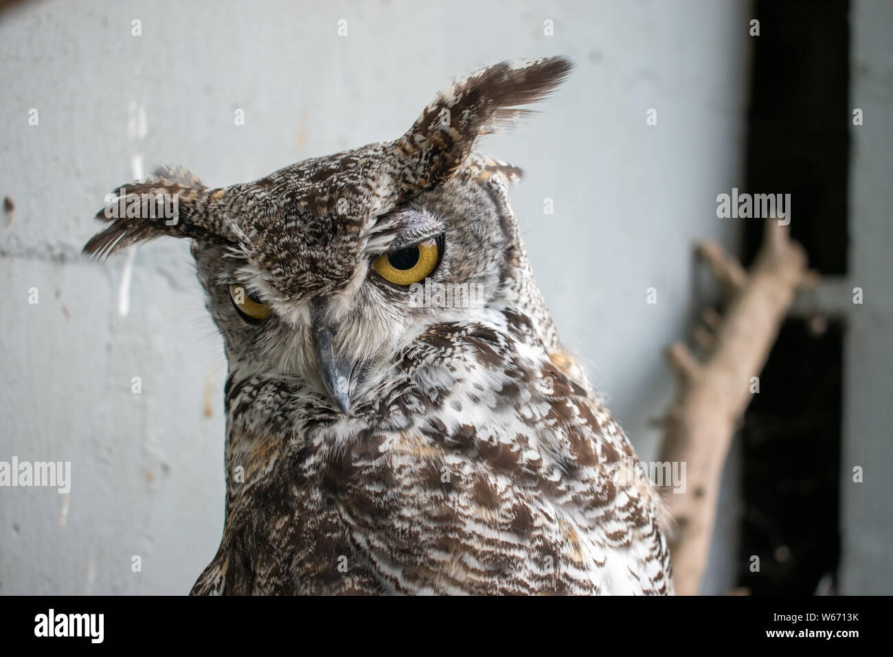 Great Horned Owl Perching On Tree Branch Water Globe Nocturnal Owl Snow Globe
