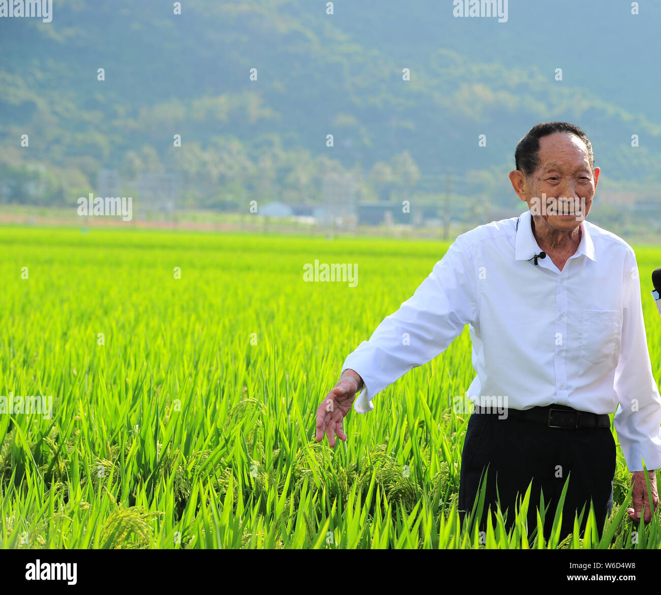 Chinese agricultural scientist and educator Yuan Longping, known for developing the first hybrid rice varieties in the 1970s, is interviewed by a jour Stock Photo