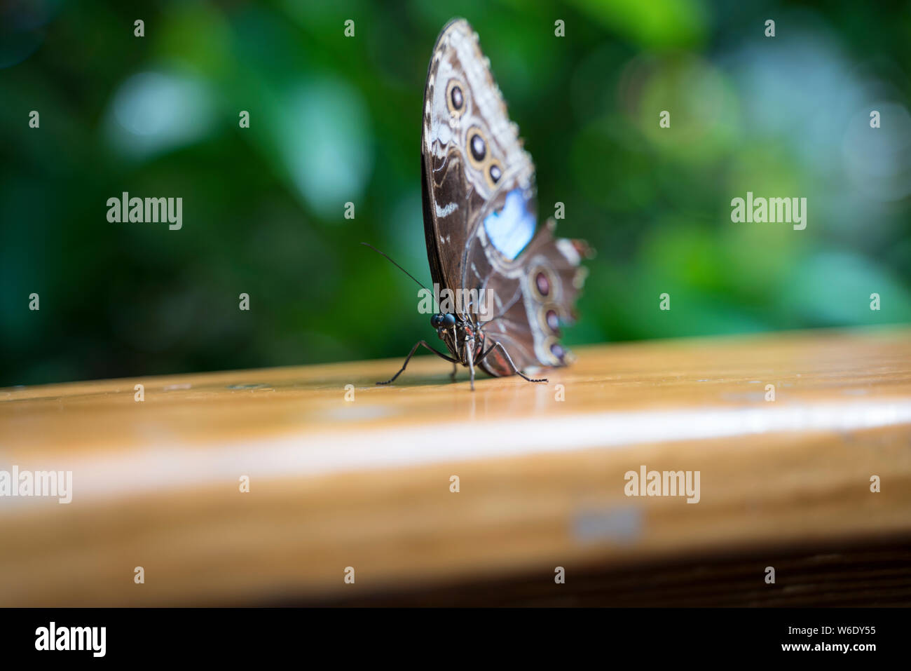 Key West Butterfly and Nature Conservatory Stock Photo