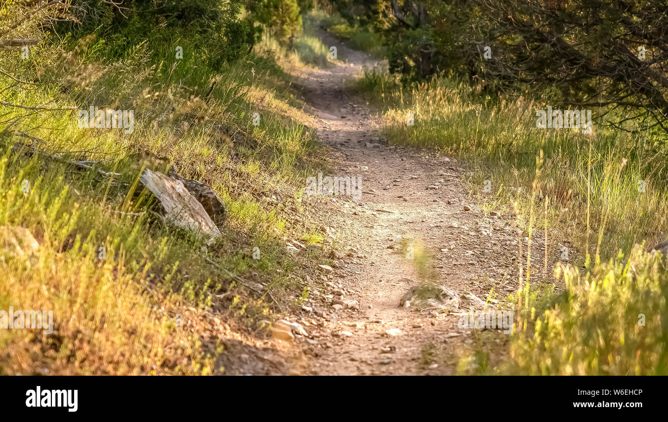 Panorama frame Close up of a sunlit and narrow dirt road in the forest on a sunny day Stock Photo