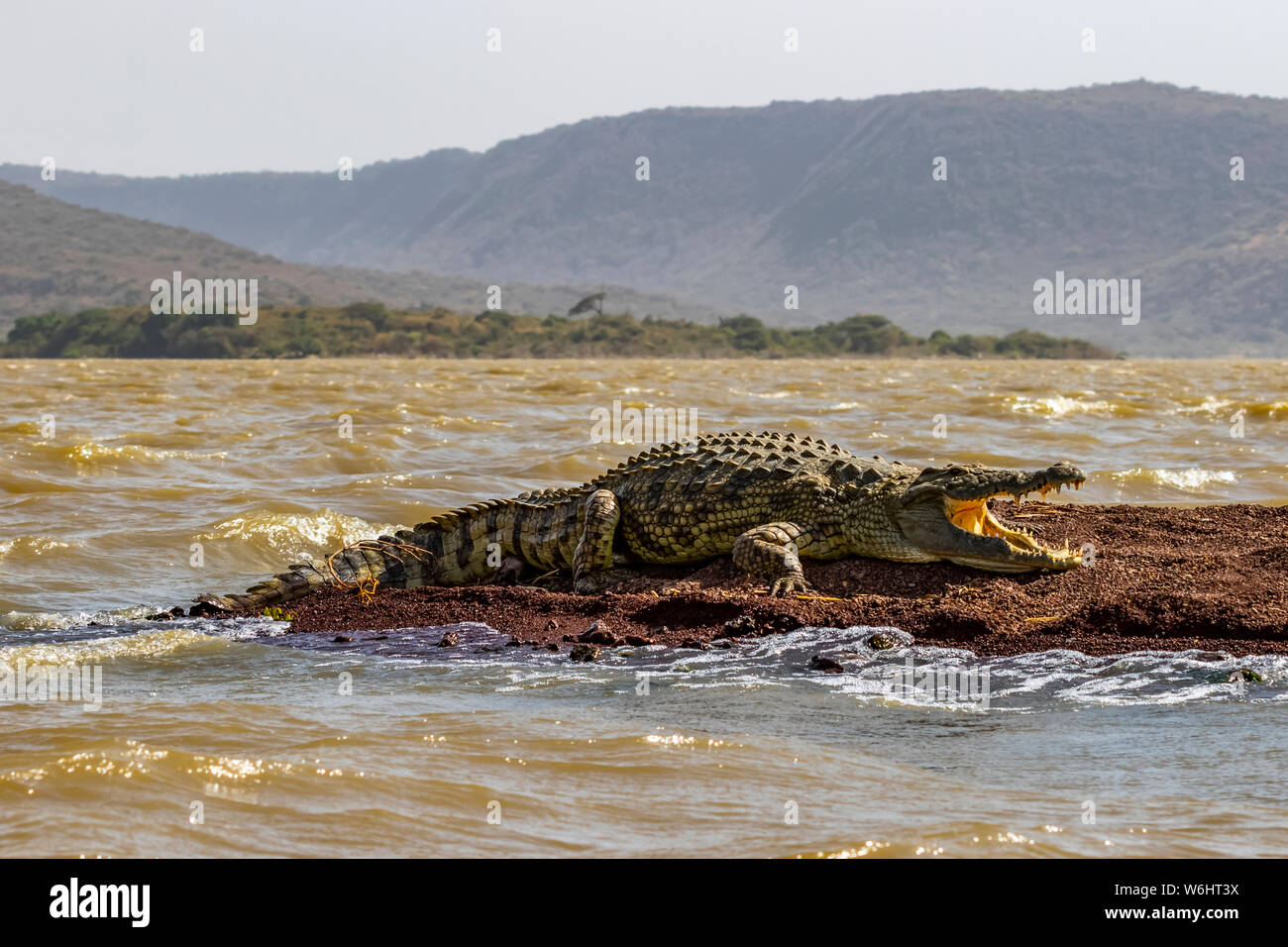 Nile crocodile (Crocodylus niloticus) in Chamo Lake, Nechisar National Park; Ethiopia Stock Photo