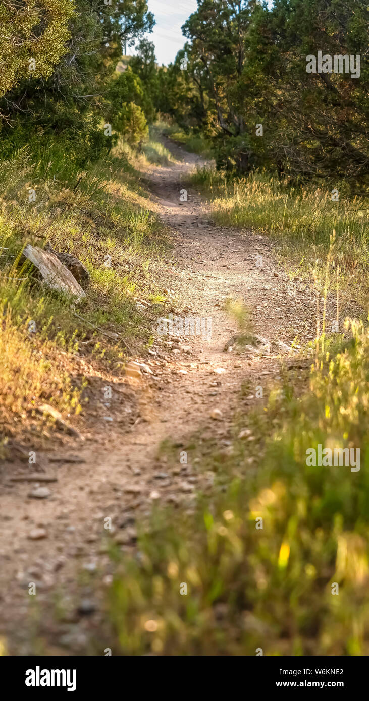 Vertical frame Close up of a sunlit and narrow dirt road in the forest on a sunny day Stock Photo