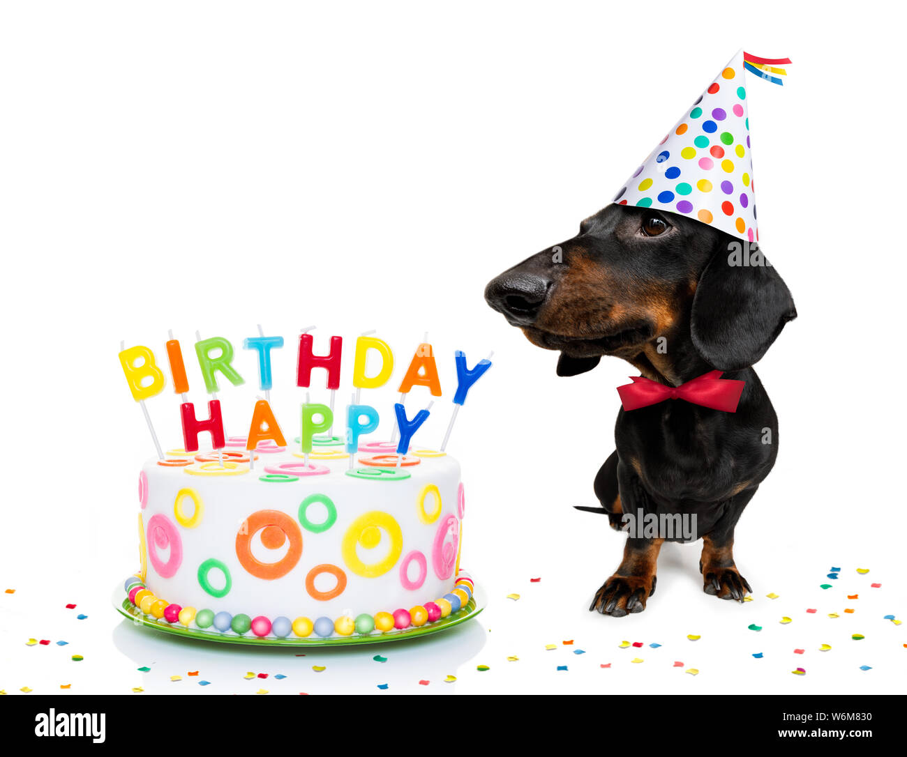 Fine Dachshund Or Sausage Dog Hungry For A Happy Birthday Cake With Funny Birthday Cards Online Unhofree Goldxyz