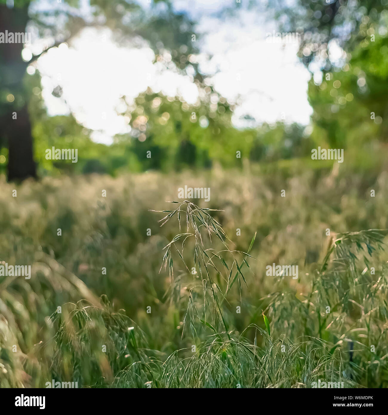 Square frame Prolific sunlit green grasses growing in the wilderness viewed on a sunny day Stock Photo