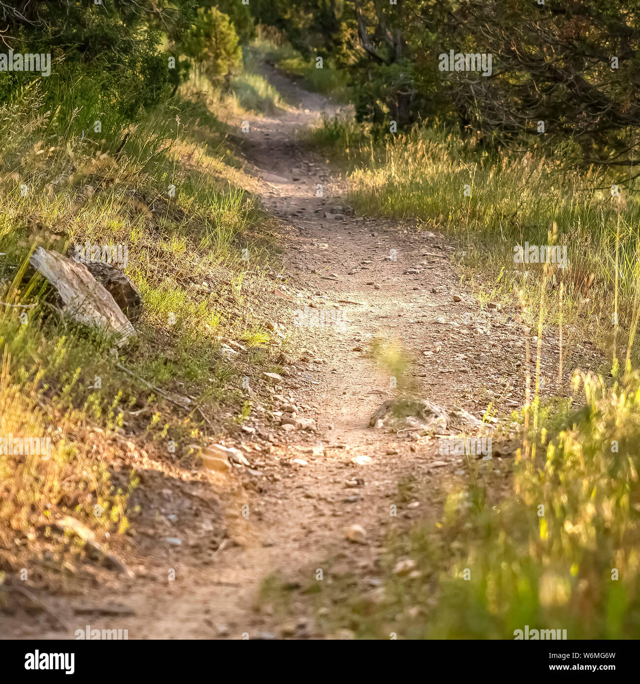 Square frame Close up of a sunlit and narrow dirt road in the forest on a sunny day Stock Photo