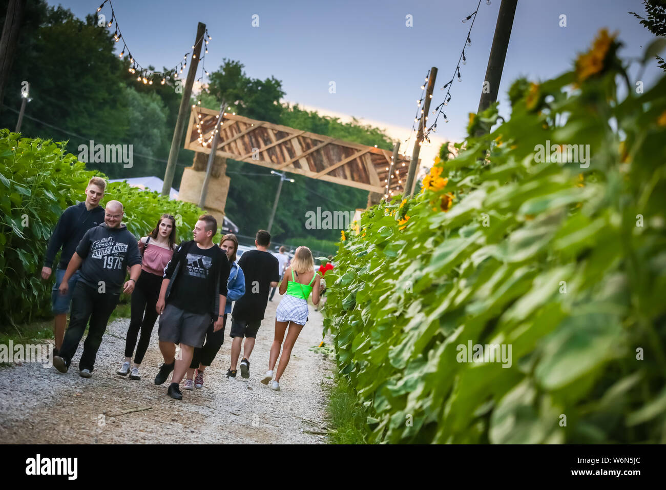 Brezje, Croatia - 20th July, 2019 : People walking thru the field of sunflowers on the entrance to the Forestland, ultimate forest electronic music fe Stock Photo