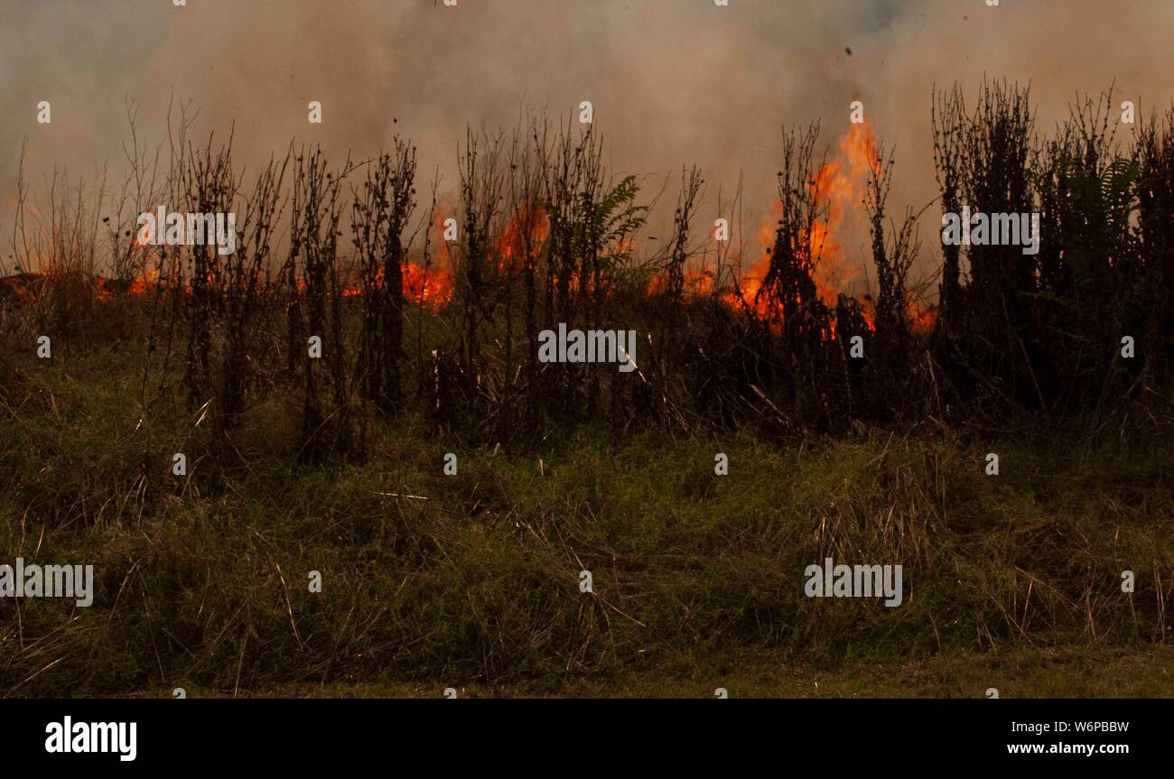 Forest fire in a park in Rome - Cinecitta' Stock Photo