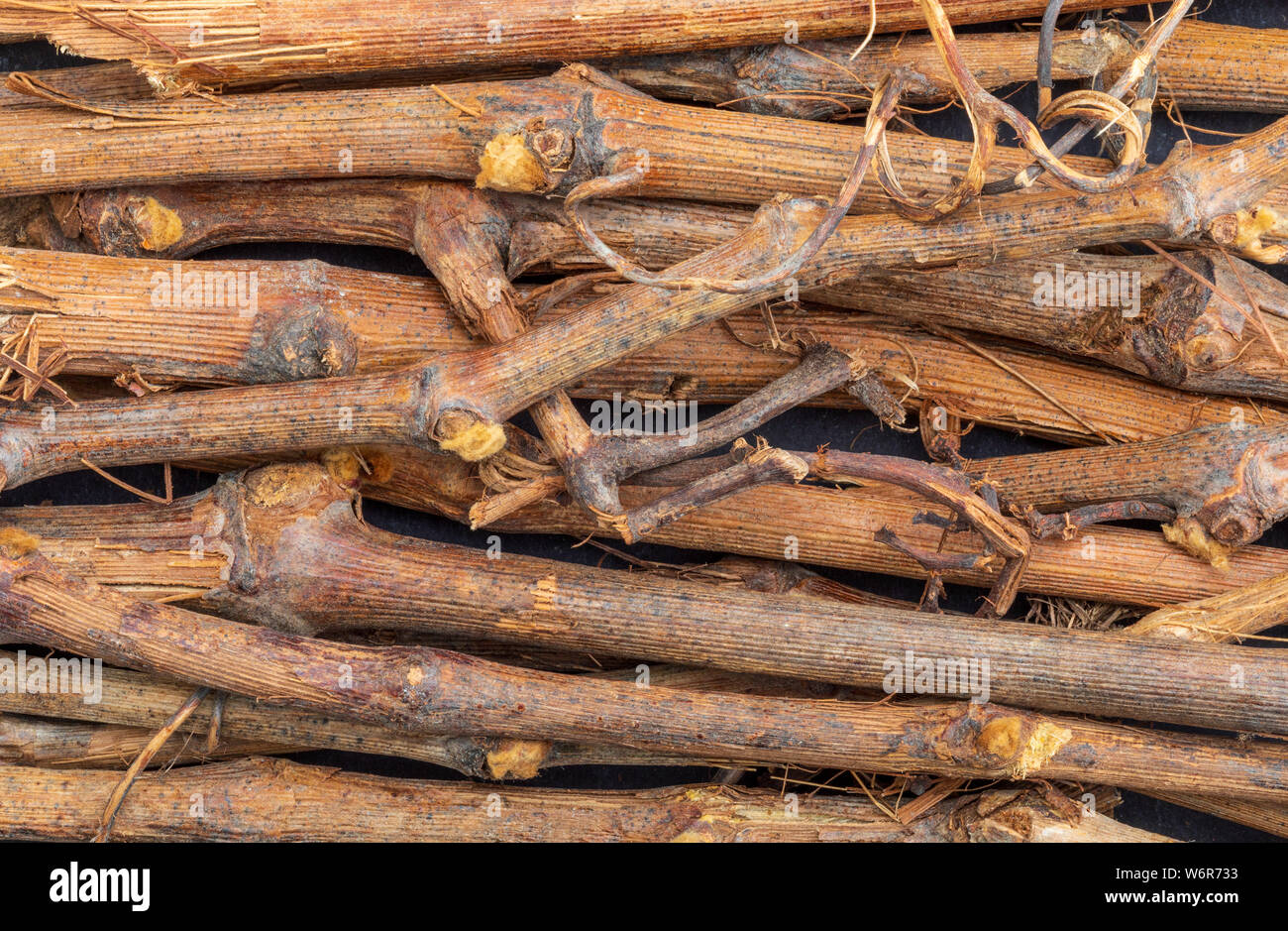 Vine shoot texture (collection of vegetable and natural fibers). Branches. Foreground. Stock Photo